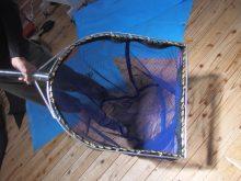 チョウザメ用タモ網